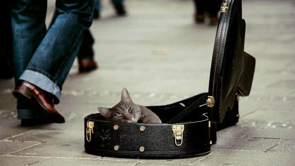 cat in guitar case busking